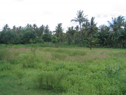 land-singaraja6